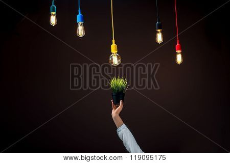 Illuminated lamps in colorful plafonds with flowerpot