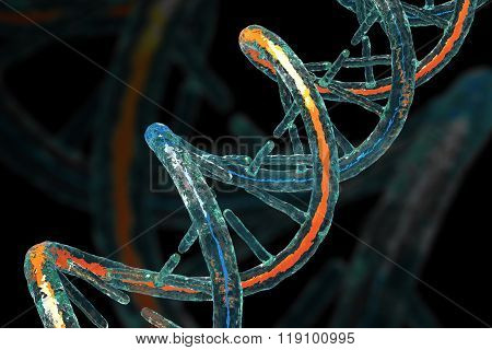 Dna Molecule Concept