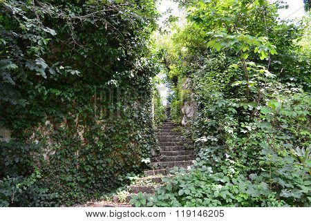 Stairs in nature