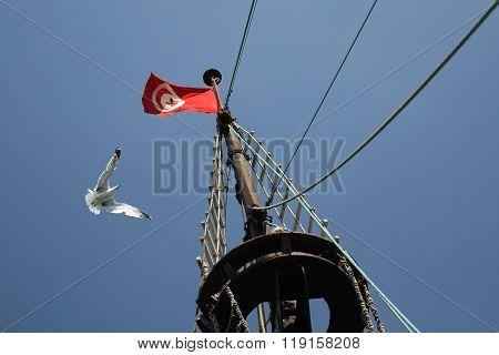 Tunisia Flag And A Seagull