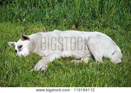 Cute fanny stray dog lying on the grass
