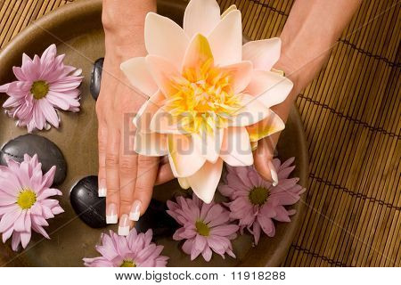 Woman holding waterlily with manicured hands