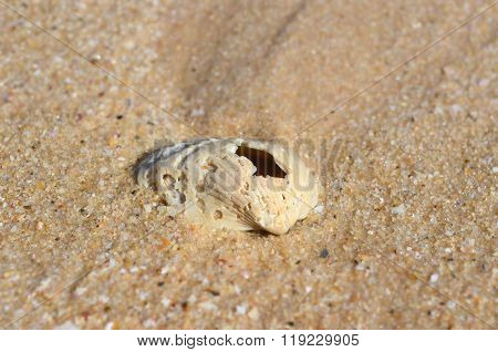 Old Shell On The Sand