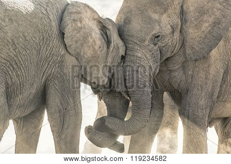 Elephant at a water hole in Etosha National Park.