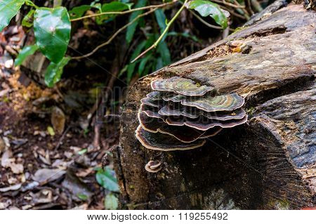 Fungus fungi on a tree trunk in rainforest. Toadstool on tree trunk. Mushrooms in tropical rain forest. Concept of symbiotic relationships in nature. Macro shot shallow dof selective focus