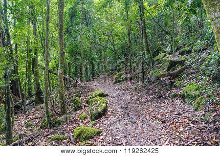 Rainforest path. Lamington National park Gondwana rainforest Queensland Australia. Hiking in tropical rain forest