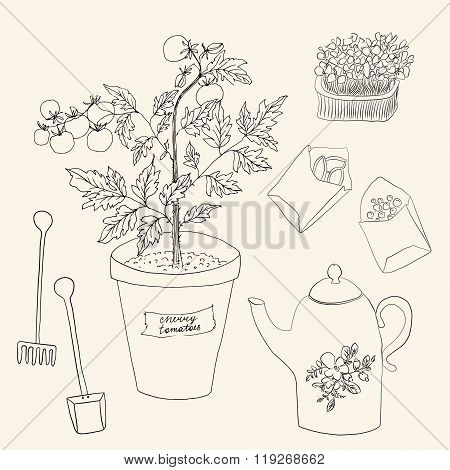 Vector Sketch Gardening Set With Tomatoes
