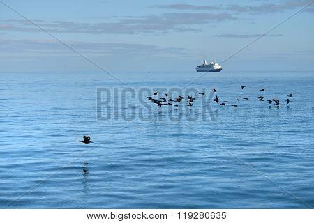 Cape Cormorants And Cruise Ship