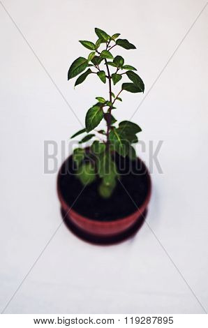 Green potted plant isolated on white background. Studio image of