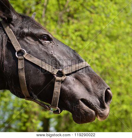 Head  Horse