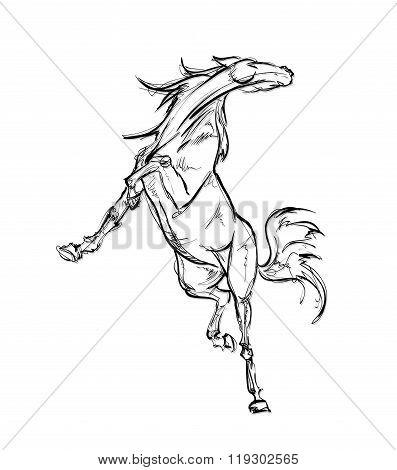 Galloping Horses. Hand-drawn Illustration