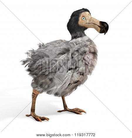 Male Dodo Bird Illustration