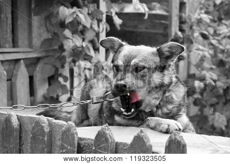 Village watchdog