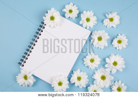 white chrysanthemums flowers on blue background with note book