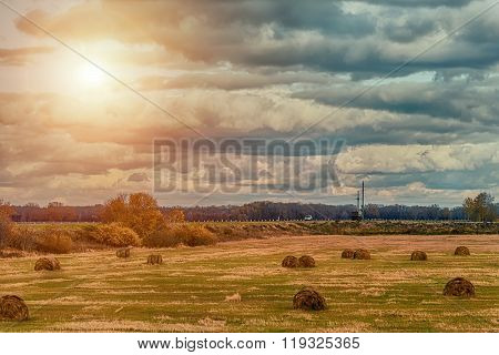 The Sheaves In The Field