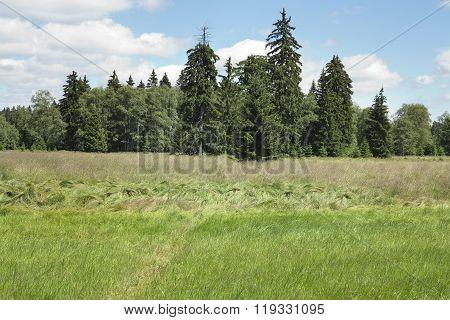 Forest in the Natural Preserve Kladska Peats