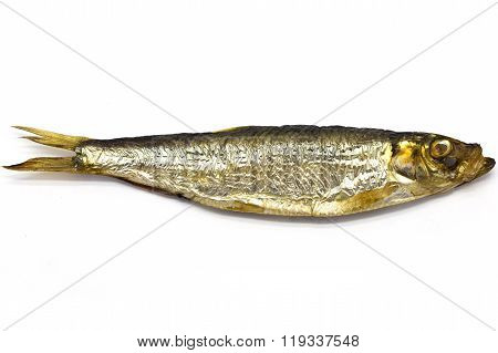 Smoked European Sprat (Sprattus sprattus) on white isolated background