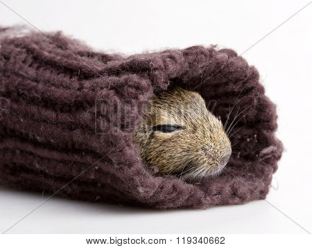 Hamster In Sleeve