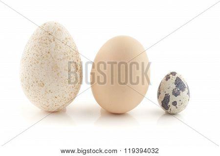 A hen egg, turkey egg and a quail egg.