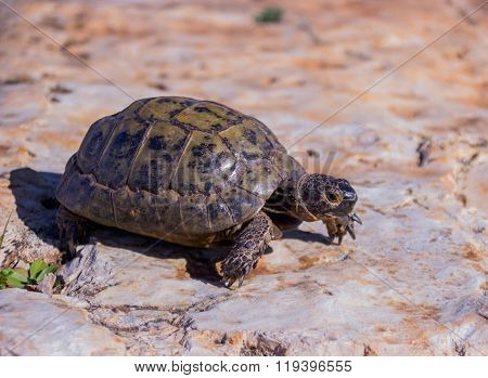 earthen turtle crawling in the early morning