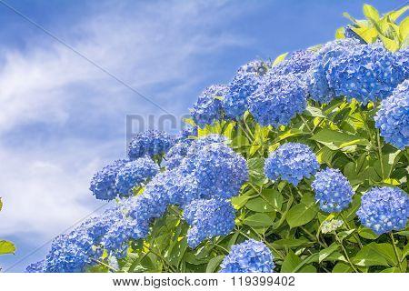 Hydrangea under sky