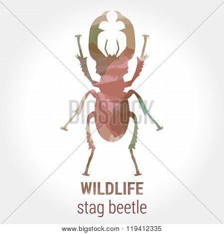Wildlife - Stag Beetle