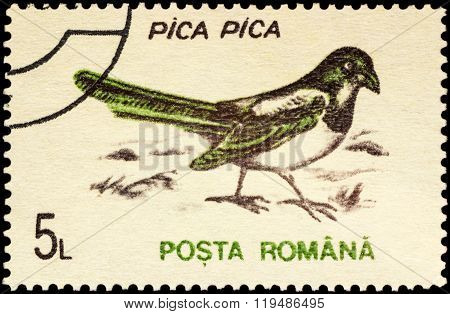 Bird Magpie (pica Pica) On Postage Stamp