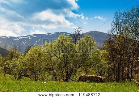 Landscape Of Mountains And Suburban Life