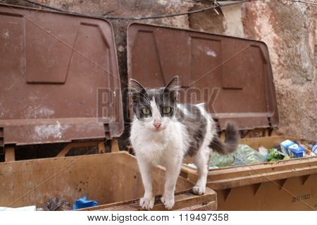 Street Cat in Bins