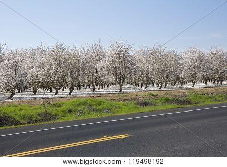 Spring Blosssom Garden