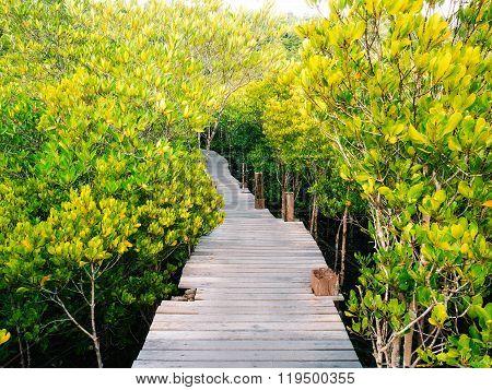 Walkway With Wooden Bridge Through Mangrove Forrest