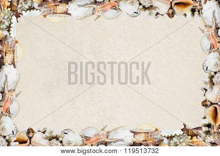Tropical Shells On A Sandy Beach