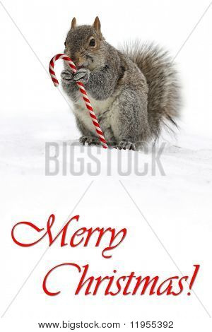 Squirrel holding a candycane