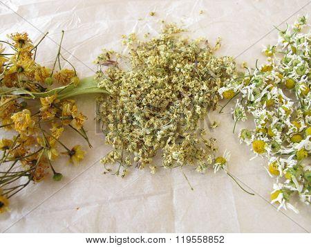 Chamomile flower, elderflower and linden flower drying on white paper