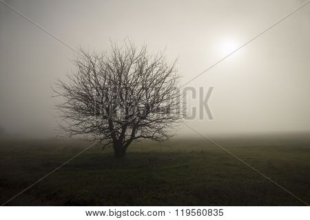 Lonely In The Fog