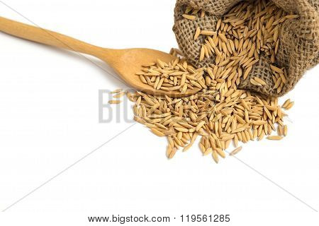 Isolated Dry Paddy Rice Grain In A Sag With Wooden Spoon