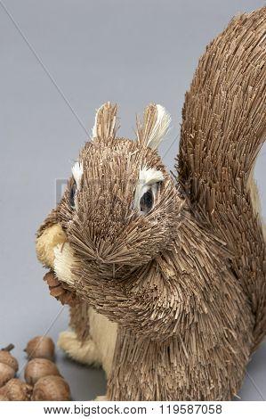 Gray Squirrel (or