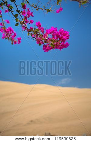 Flowers Blossomed In An Oasis In The Desert