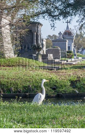 Bird At Classical Colonial French Cemetery In New Orleans,  Louisiana