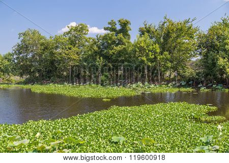 Water Lilies, Grass, Trees And Other Vegetation In Brazos Bend State Park Near Houston,  Texas