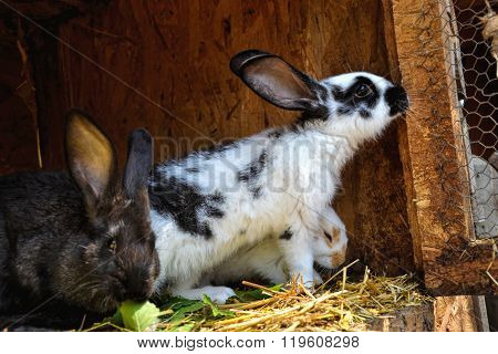 Many young bunnies in a shed. A group of small rabbits feed in barn yard. Easter symbol