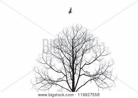 Bird Flying Over Barren Tree Isolate On White Background