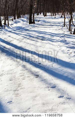 Slippy Country Road In Forest In Sunny Day