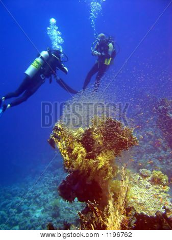 Coral With Tiny Fish And Divers