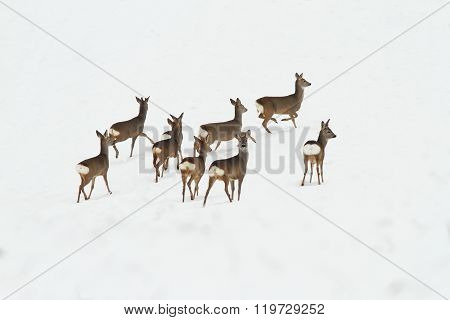 Herd Of Deers On Snow