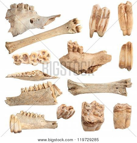 Isolated Different Animal Bones