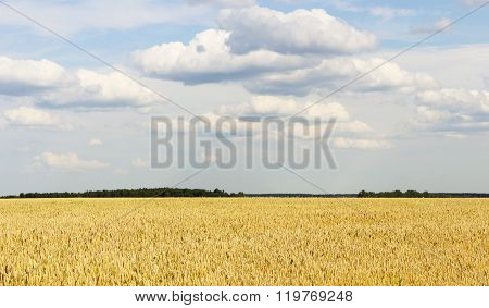 The Boundless Wheat Field