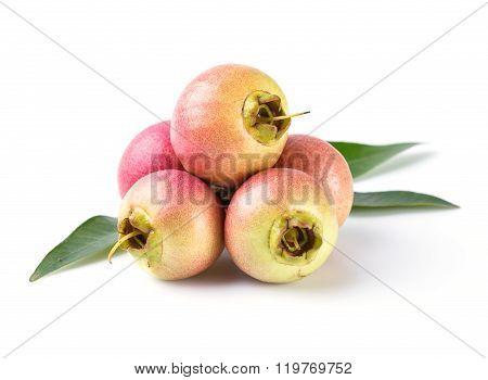 Syzygium Jambos Rose Apple