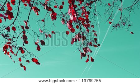 red tree leaves and sky with contrails