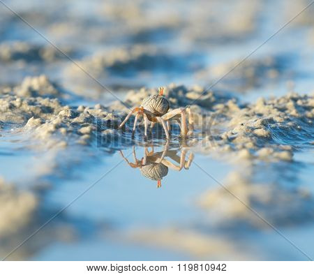Sea crab on the beach of a tropical lake